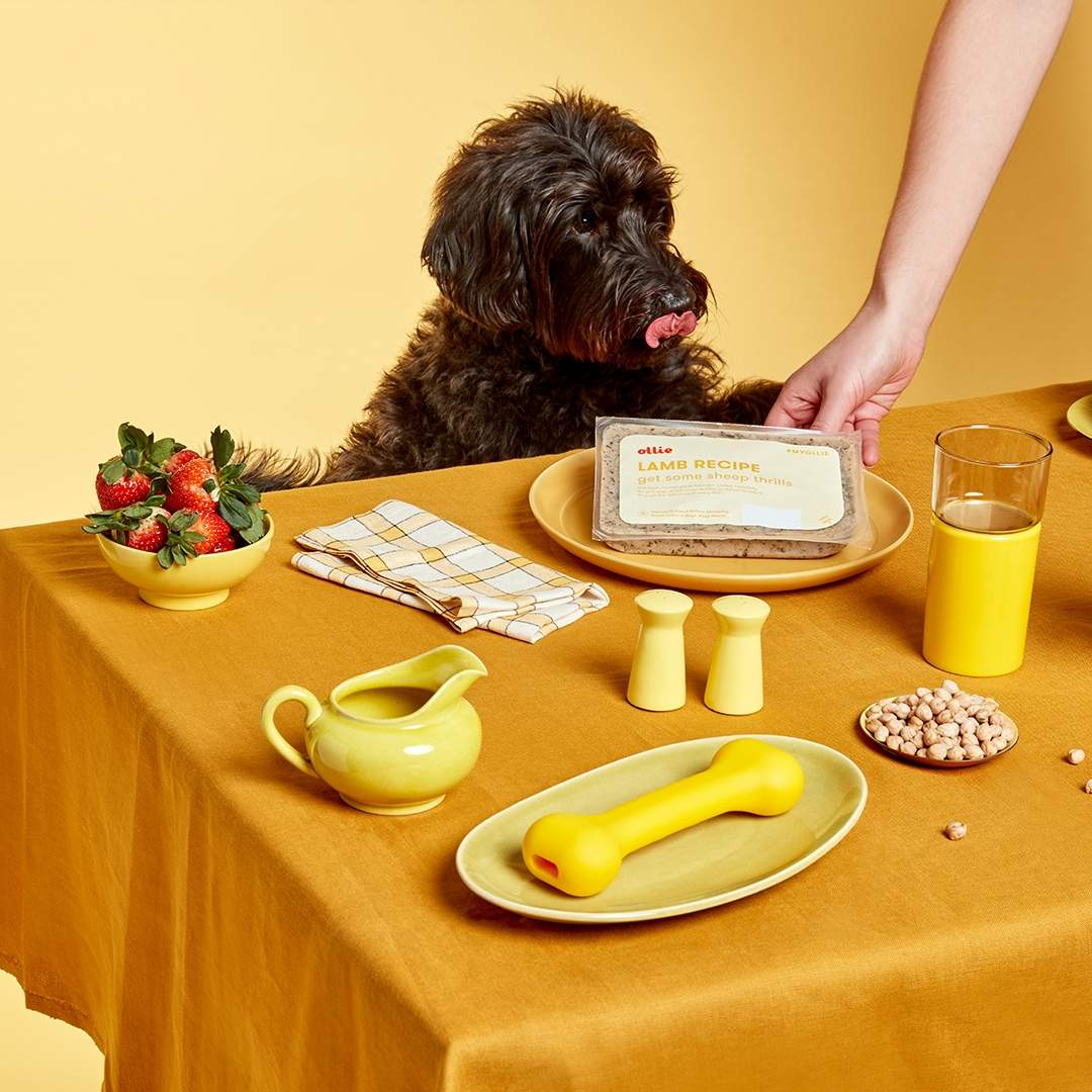 What is the best dog food for Labradoodles?