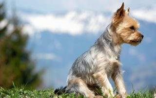 top 10 dog breeds