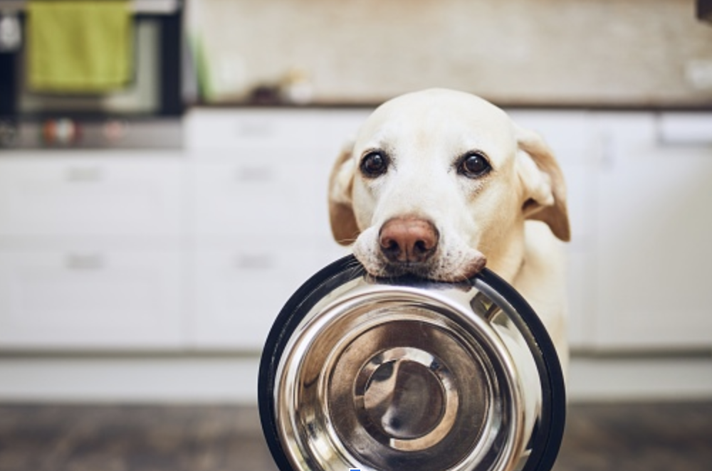 3 Things Your Dog Shouldn't Eat
